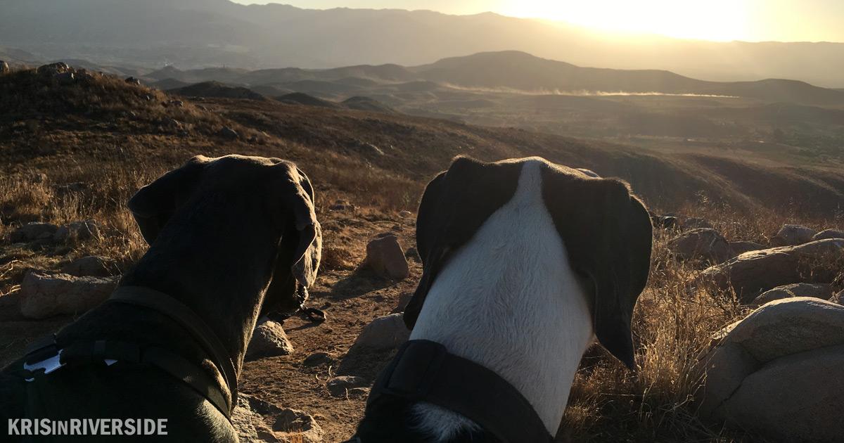 Hiking near Lake Mathews with the pups.